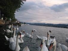 Zorich lake 49